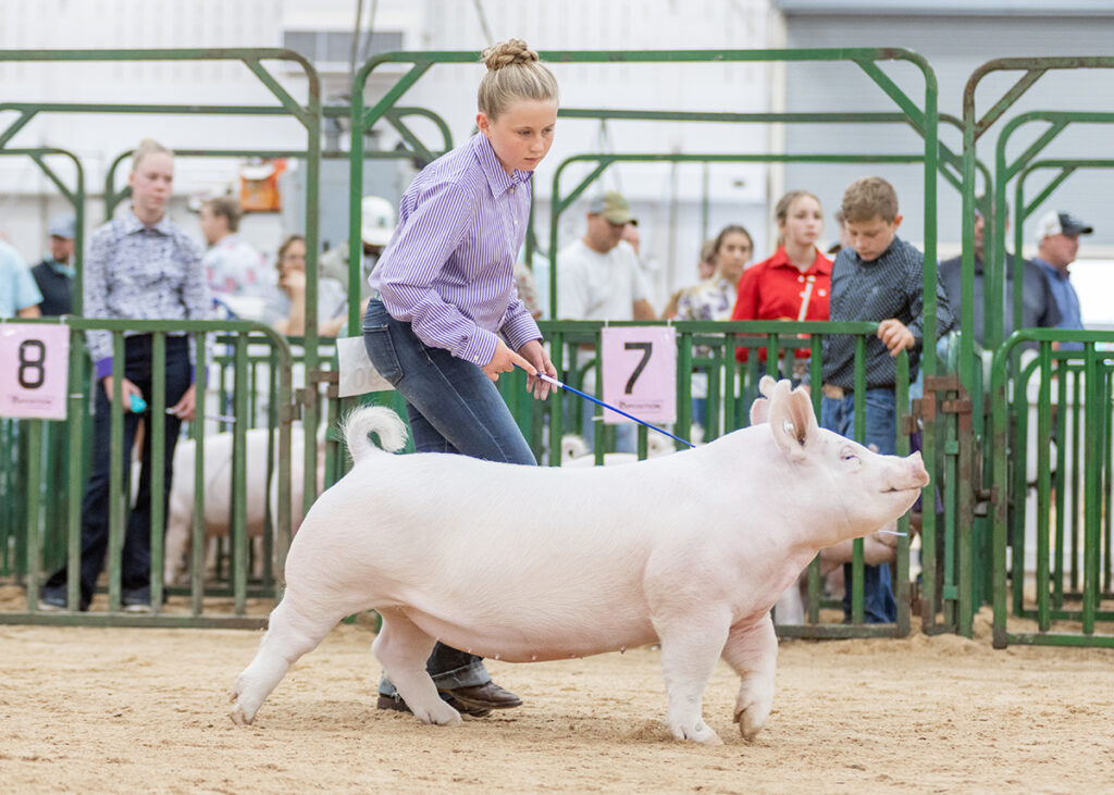 3rd Overall Division 2 Yorkshire Gilt