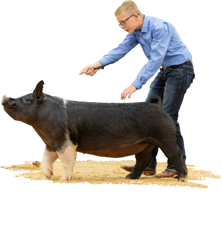 4th-Overall-Crossbred-Gilt-The-Exposition-Ethan-Stohlquist-Nothing-To-Hide-X-Deadbolt