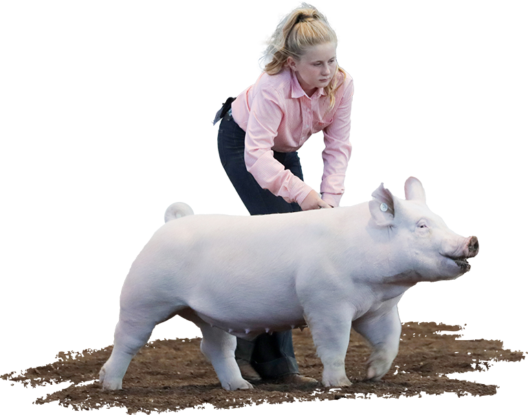 5th Overall Barrow Illinois State Fair Reserve Yorkshire Isabel Stohlquist Knockout X Gain Control jpg